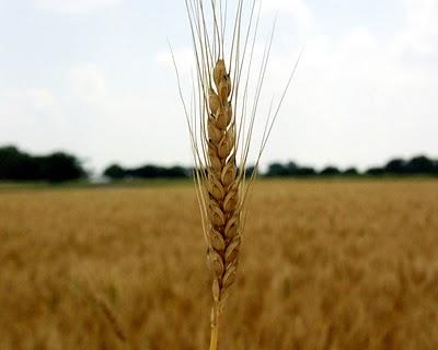 Farmers receive payments for cereals crops